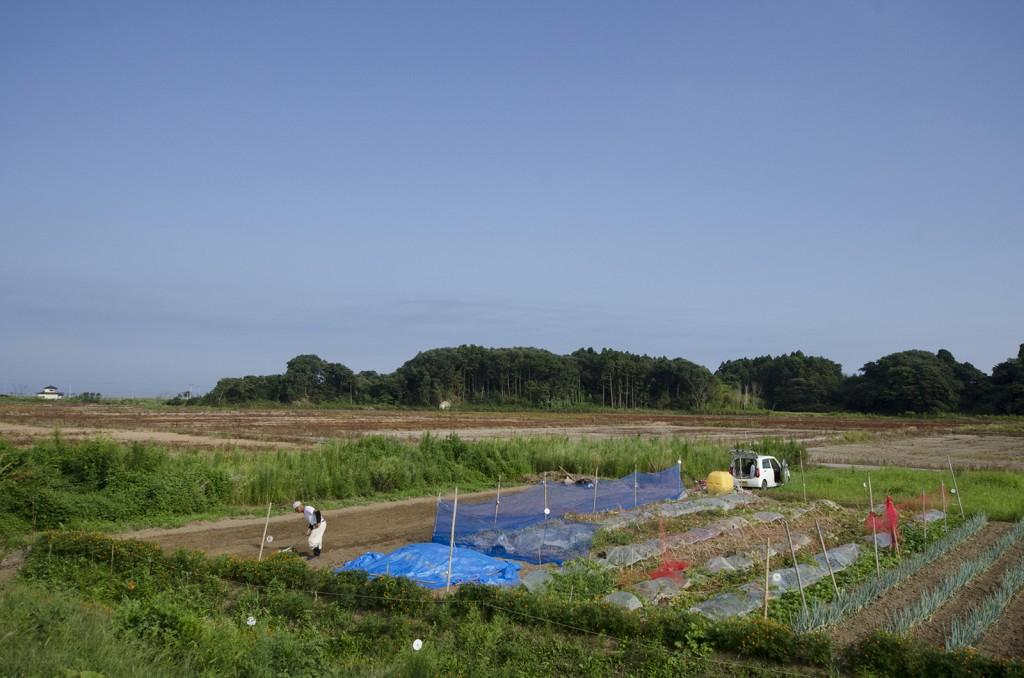 畑を耕す老人が。津波による塩害のせいか、周囲は枯れたまま。