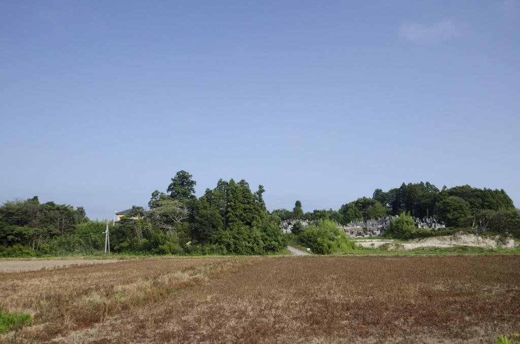 枯れたままの土地。右奥に墓があるが、墓石も一通り流されたり壊れたので、新しいものになっているそう。